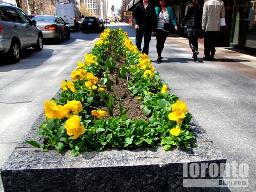 Bloor Street planter box on sidewalk east of Church Street