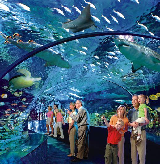 Ripley's Aquarium Shark Lagoon
